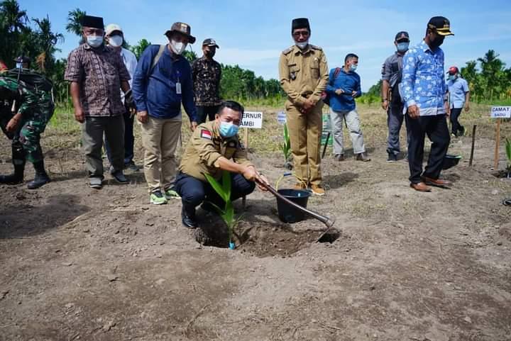 Kunker ke Tanjab Timur Perkuat Sektor Pertanian, Gubernur Tanam Komoditi Pinang di Sadu